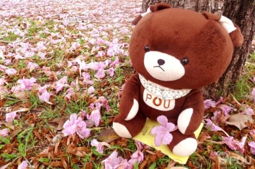 槟城四月天:等雨的季节 花都开好了