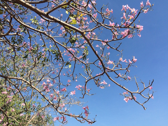 花季来了~ 追花的日子