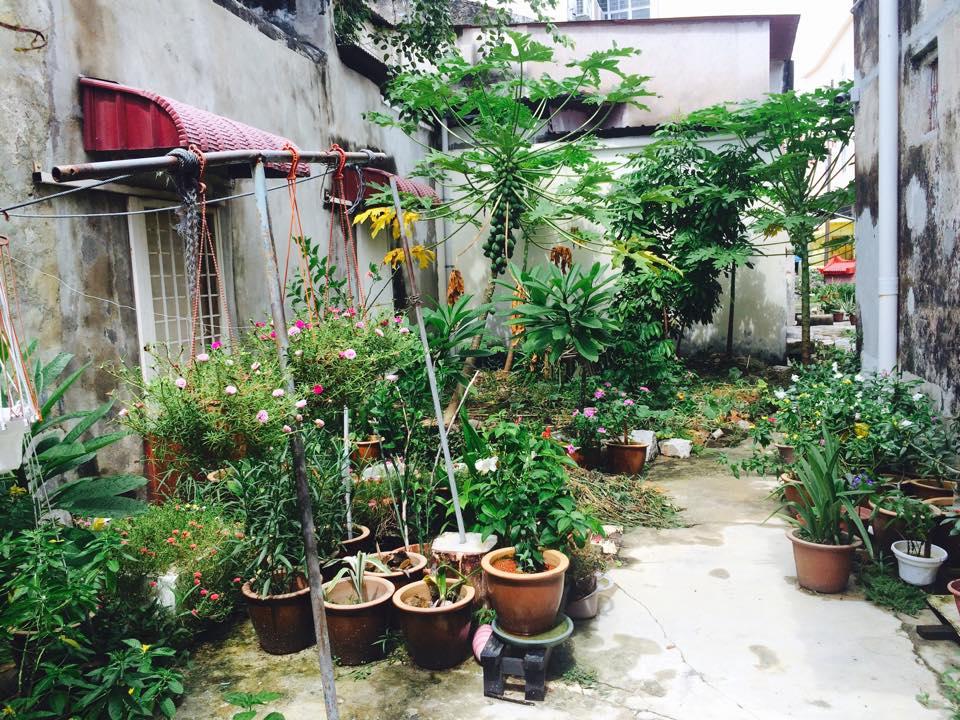 绿色生活美学: 从前嬉戏的地方,如今处处一片绿意盎然