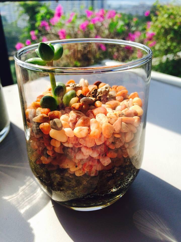 绿色生活美学 :朋友用心点缀的小盆栽