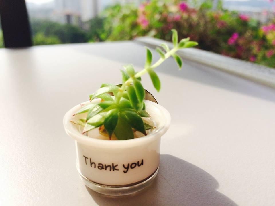 绿色生活美学 :托朋友从首尔买回来的迷你盆栽 mini cactus from seoul