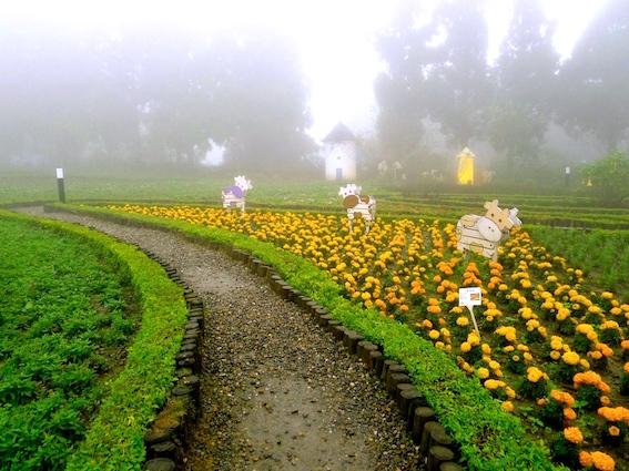 温暖时光:烟雨蒙蒙的清境小瑞士花园