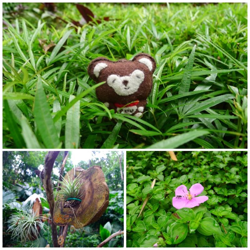 Tropica Spice Garden