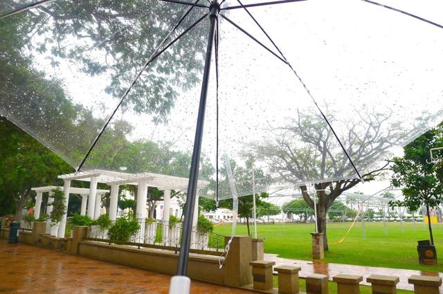 那一个下午,我独自撑起了一个雨天,一个非常幸福的雨天。