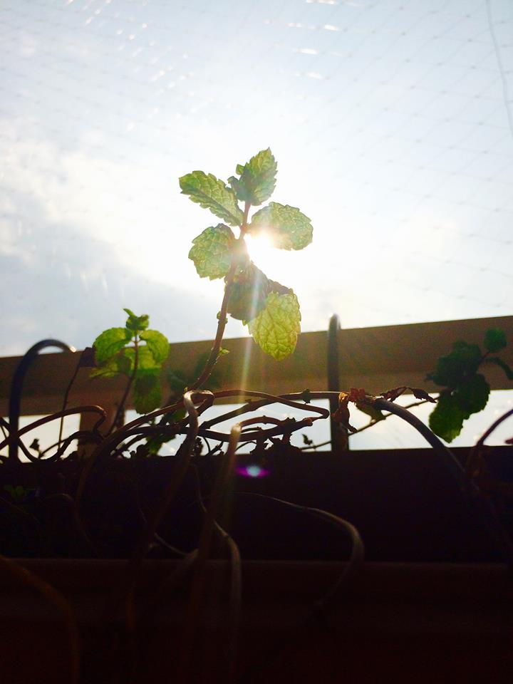 Plant11